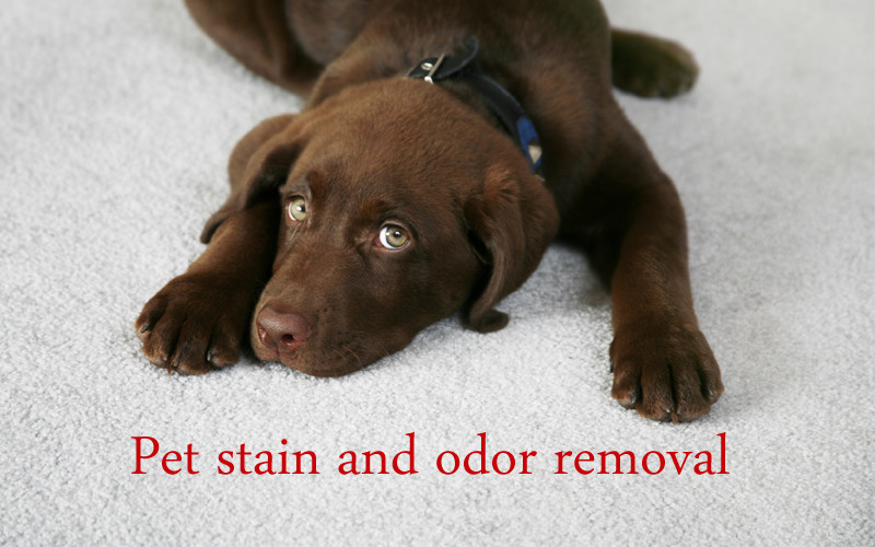 pet-stain-odor-cleaning